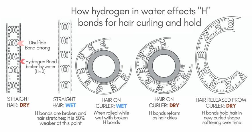 """How Hydrogen in Water Effects """"H"""" Bonds for Hair Curling and Hold"""