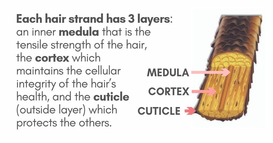 3 Layers of Hair - Medula - Cortex - Cuticle | Hair Mist Refresher Eco-Spray Bottle: Ditch Single-Use Plastics & Chemicals